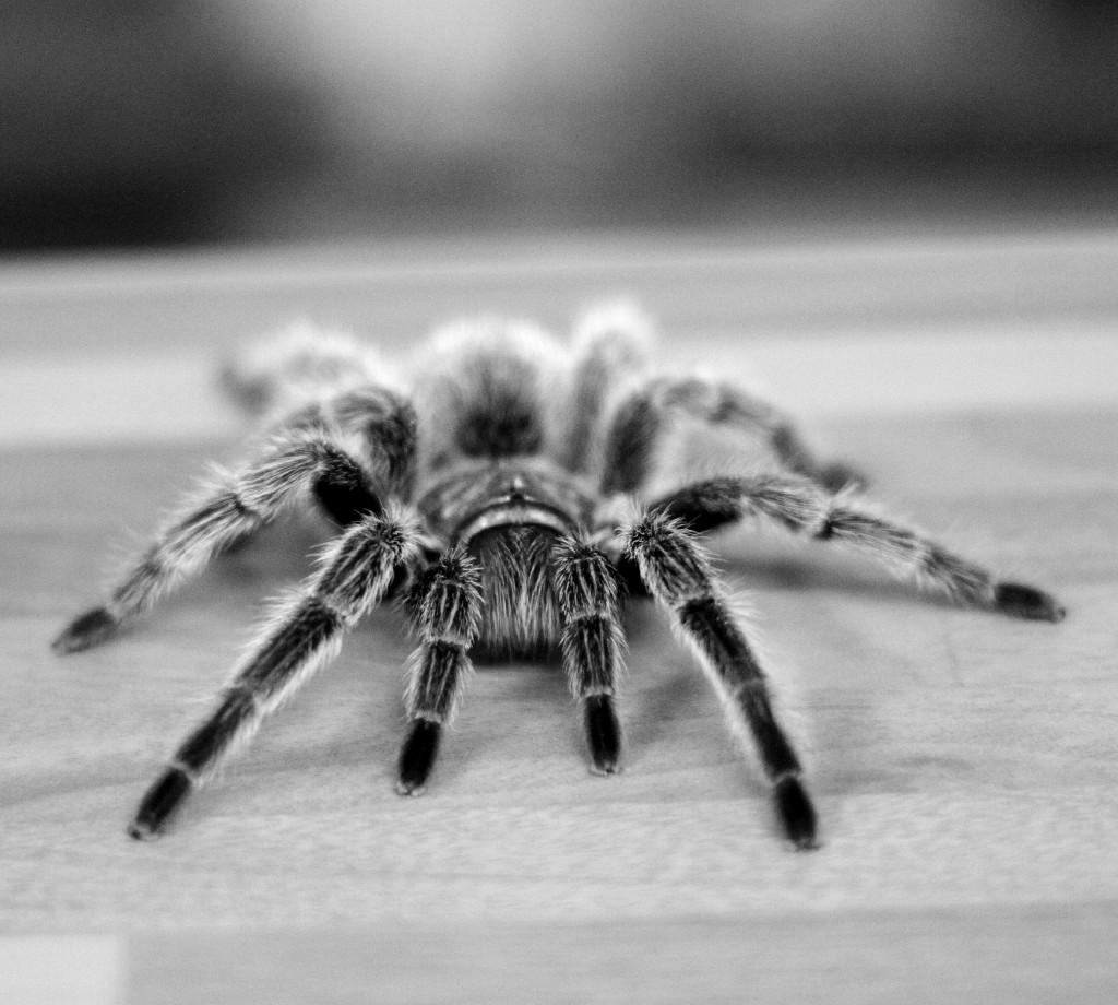 Miedos - Fobias - Psicólogos Salamanca